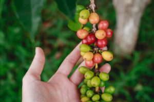 グリーンコーヒーの効果や飲むタイミングとは?どこで買えるの?